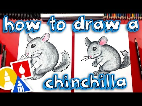 How To Draw A Chinchilla - Replay Live Draw Along