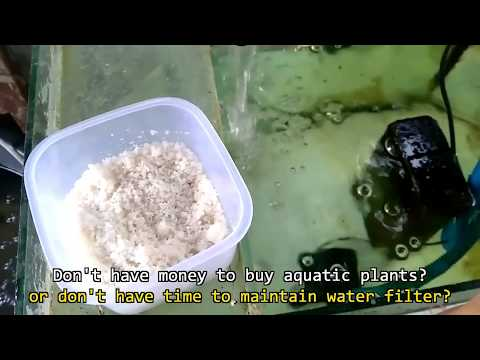 How to Reduce Smelly Water & Ammonia in Aquarium