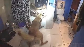 Bodycam Shows Tulsa Police K-9 Pull Suspect From Bathtub