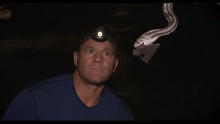 Bat-eating Snakes of Mexico! | Deadly 60 | Series 3 | BBC