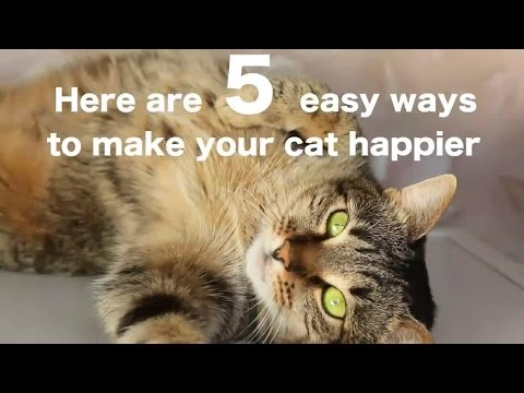 5 Easy Ways to Make Your Cat Happier
