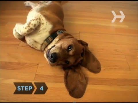 How to Housebreak a Dog