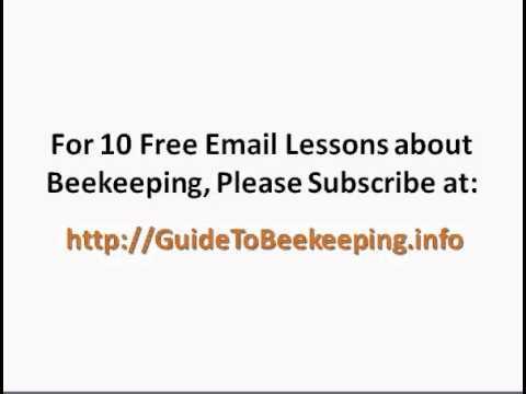Beginning Beekeeping: Tip to Find a Good Breeder