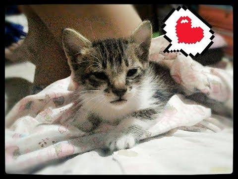 Pampering a Kitten to Sleep ฅ•ω•ฅ