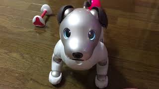 Sony Aibo Robot Dog learns to play dead!