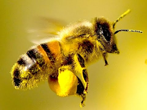 4 Easy Ways You Can Save the Bees