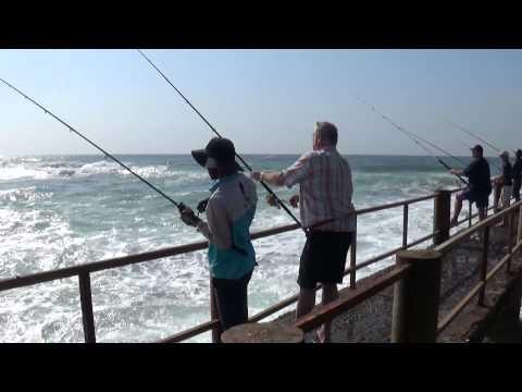 Shad fishing Uvongo pier 2014 09 04