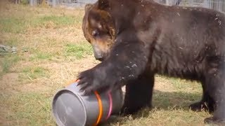Brown bear relocated to wildlife park after 17 years in tiny cage