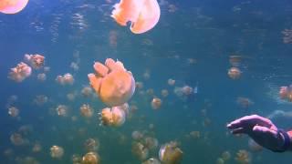 Jellyfish Lake, Rock Islands, Palau (GoPro HD2)