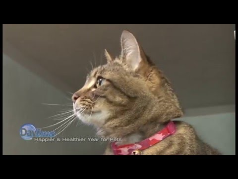Keeping Your Cats Happy and Healthy