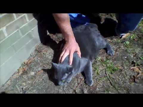 Leaner Living: Drago the cat's weight loss transformation
