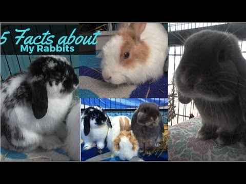 5 facts about my rabbits (pixie, ella, merlin)