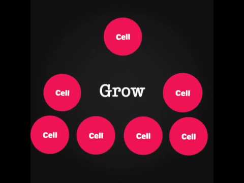 How do we produce genetically identical cells?