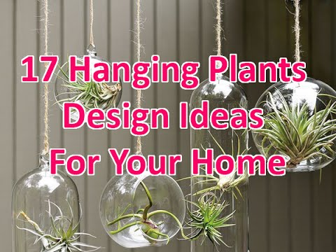 17 Hanging Plants Design Ideas For Your Home - DecoNatic