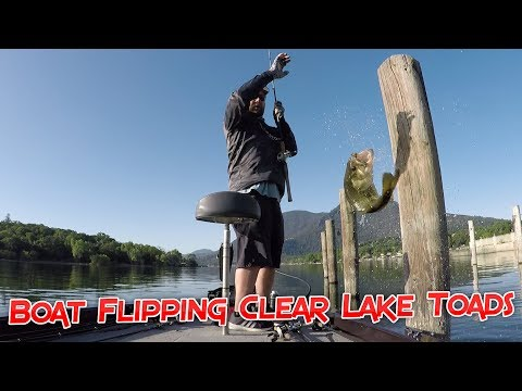 Boat Flipping Clear Lake Toads