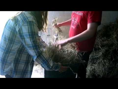 Making Hay Bales By Hand