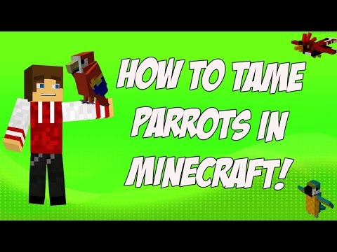 How to Tame Parrots in Minecraft 1.12 (Use Seeds not Cookies)