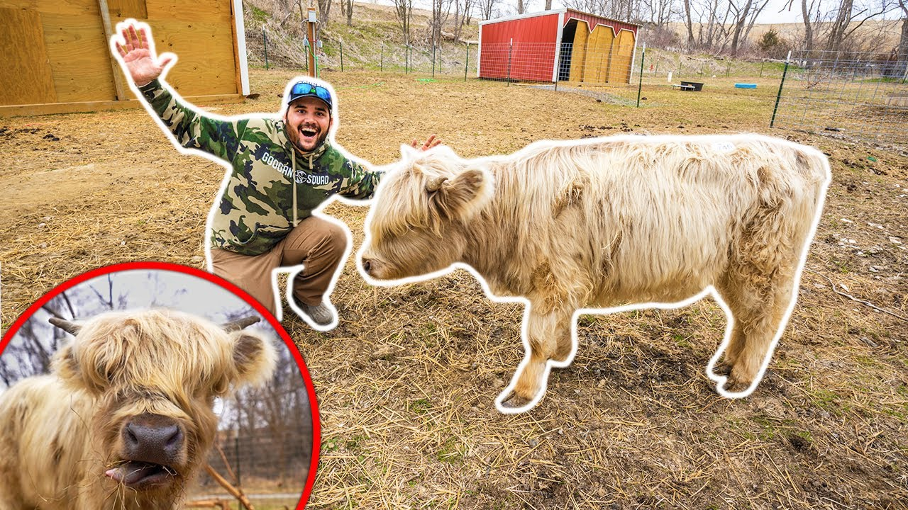I Bought a RARE MINI COW for My BACKYARD FARM!!! (Expensive)