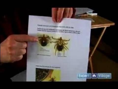 Flea & Tick Control : Find Ticks on Your Dog