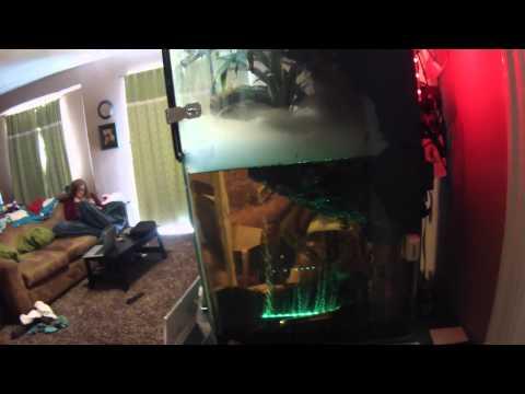 Frog Terrarium