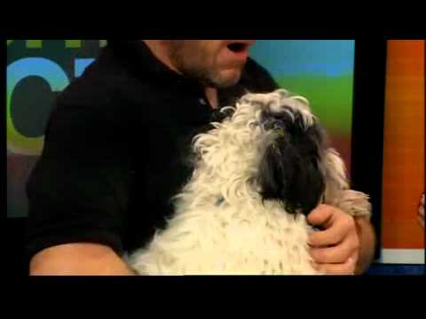Tips for adopting a shelter dog with David Henon