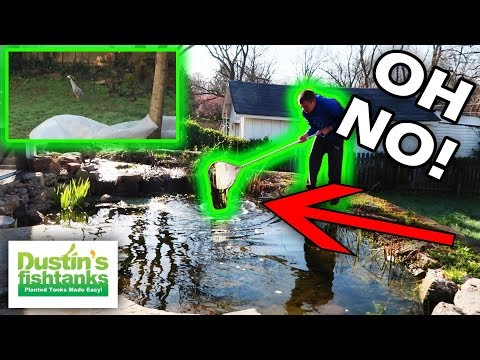 NOT AGAIN - Garden Pond Spring Opening