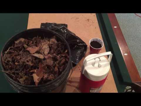How to make leaf compost aka leaf mold in 2 months!