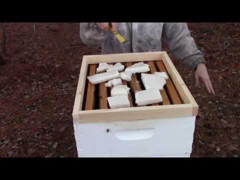 Winter feeding honey bees 1