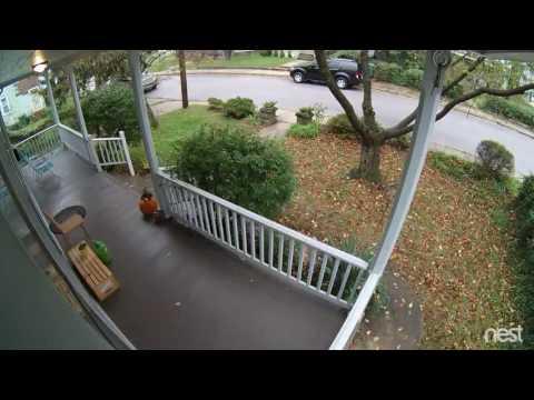 Squirrels eat pumpkins?