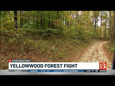 Yellowwood Forest Fight