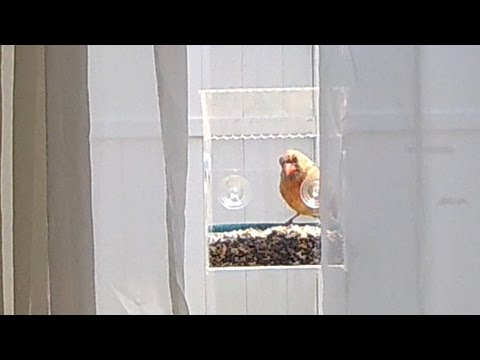 NEW! Squirrel Proof Window Feeder