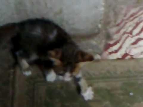 lost kitten.mp4