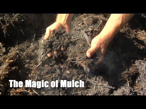 The Magic of Mulch