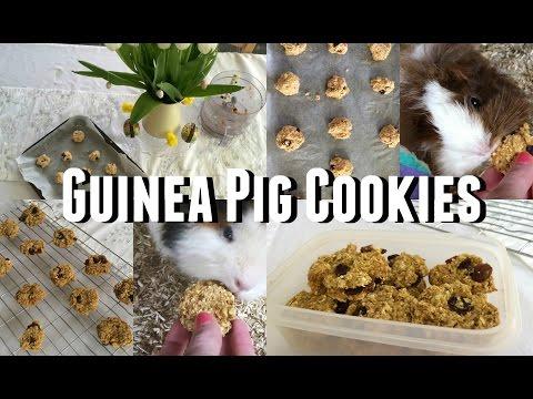 DIY Guinea Pig Treats - Cookies |♡Imy'sAnimals♡