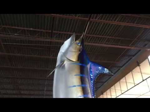 Blue Marlin Wave Mount - Gray Taxidermy Fishmounts, Custom fish reproductions