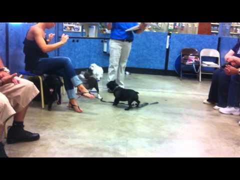 Puppy training class at Petsmart Level 1