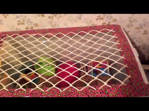 How to make a hamster bin cage (super easy)