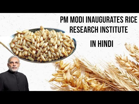 Rice Research Institute inaugurated by PM Modi, 1st IRRI outside Philippines, Current Affairs 2019