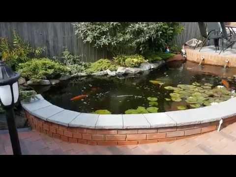 Tel's Pond Update Part 2