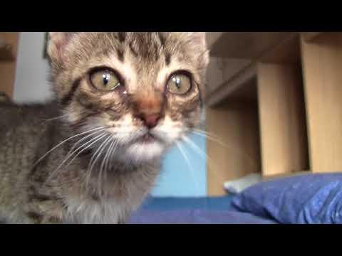 Cute Kitten Purring (Gattino fa le fusa)
