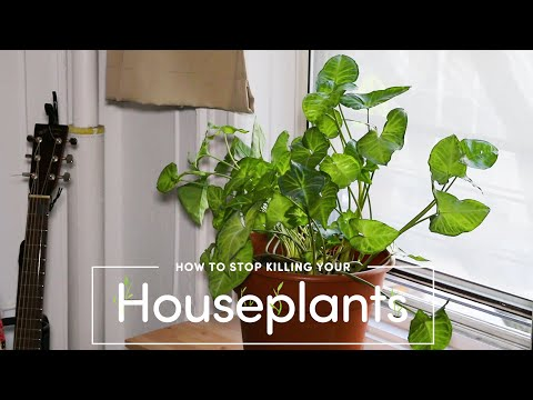 How To Stop Killing Your Houseplants #EarthMonth