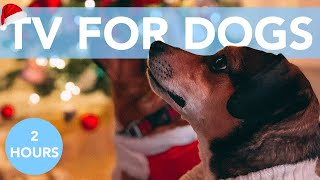 TV FOR DOGS with Relaxing Christmas Music! Auld Lang Syne!