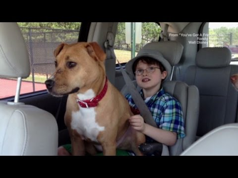 Autistic Boy & Rescue Dog Bond