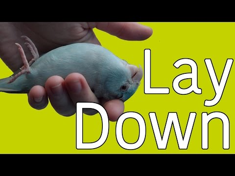 Training Tutorial | Lay Down