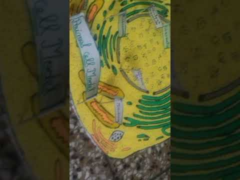 How to make a animal cell model