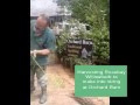 Harvesting Rosebay Willowherb at Orchard Barn - to make into string