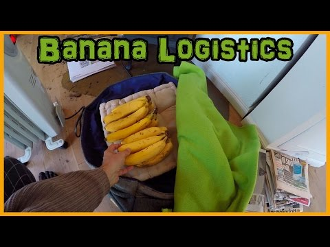 BANANA RIPENING TIPS: HOW TO SLOW DOWN OR SPEED UP THE PROCESS