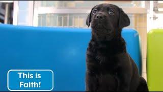 Sponsor a Puppy - Faith