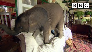 Baby elephant causes havoc at home - BBC