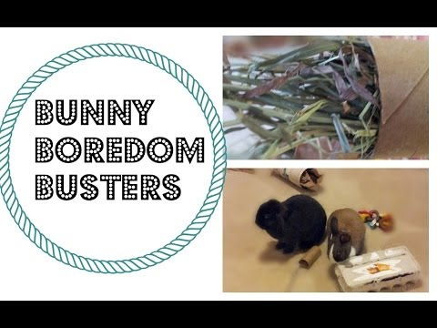 Bunny Boredom Busters